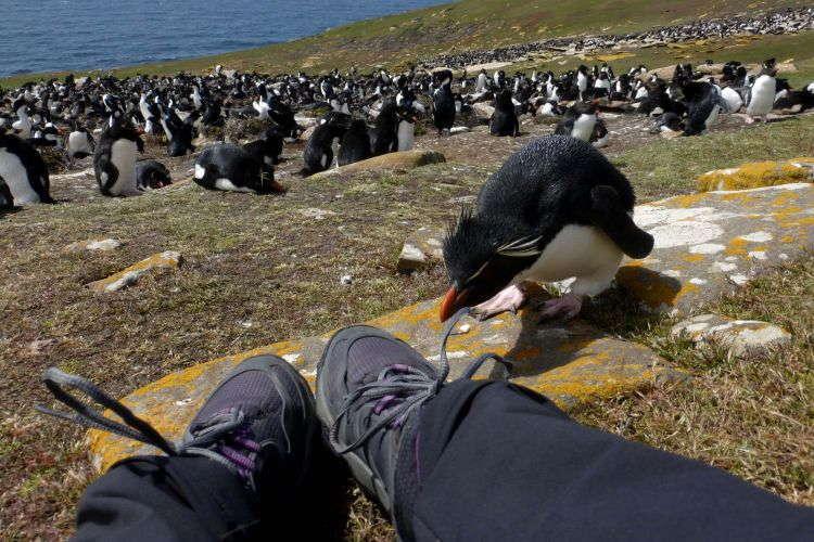 Best Travel Selfies Falkland Islands