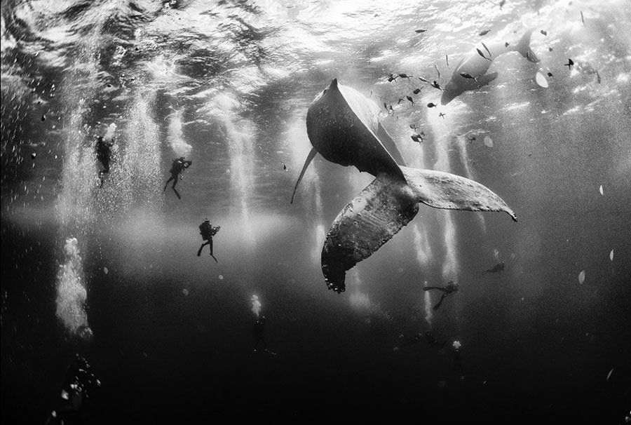2015 National Geographic Traveler Photo Contest Whale