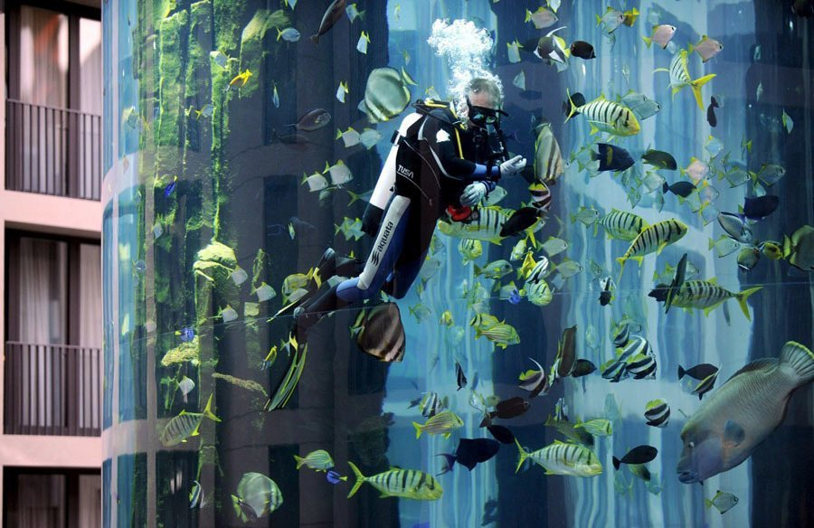 Diver In A Berlin Aquarium
