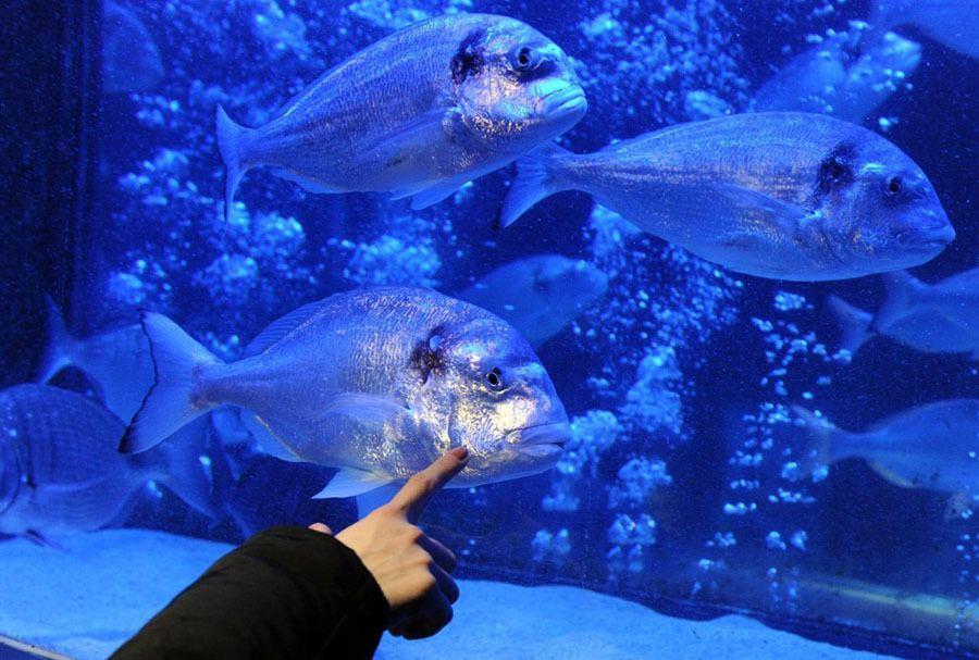 Berlin Aquadom Aquarium