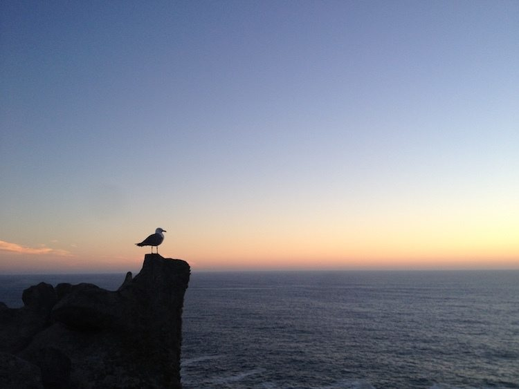 Cies Islands Sunset Seagull