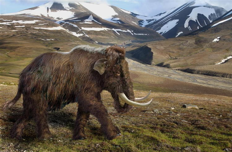 De-Extinction Woolly Mammoth
