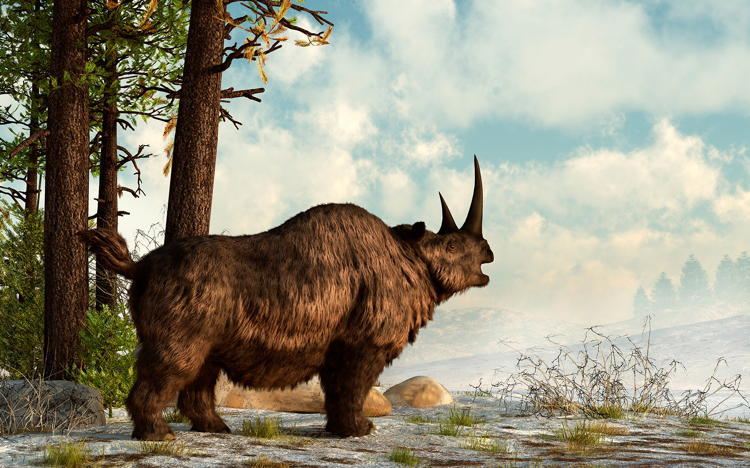 De-Extinction Woolly Rhinoceros