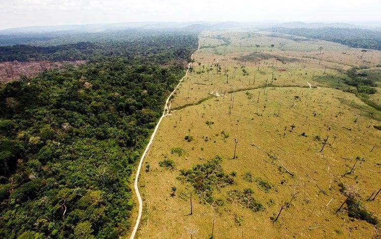 Deforestation De-Extinction