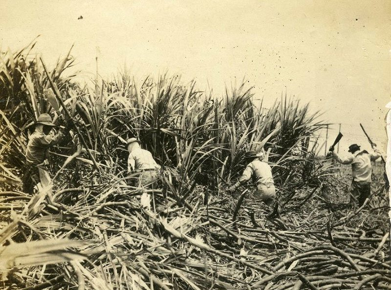 History of Hawaii Sugar Plantation