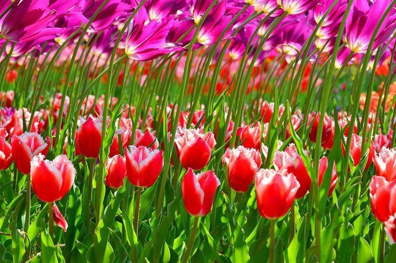 Hitachi Seaside Park Blooms