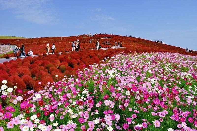 Hitachi Seaside Park October