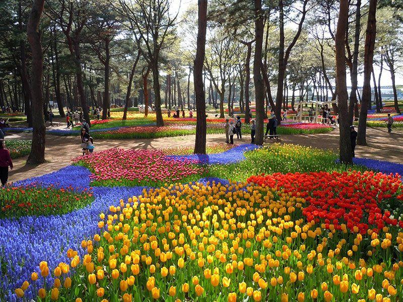Hitachi Seaside Park Tulips Japan