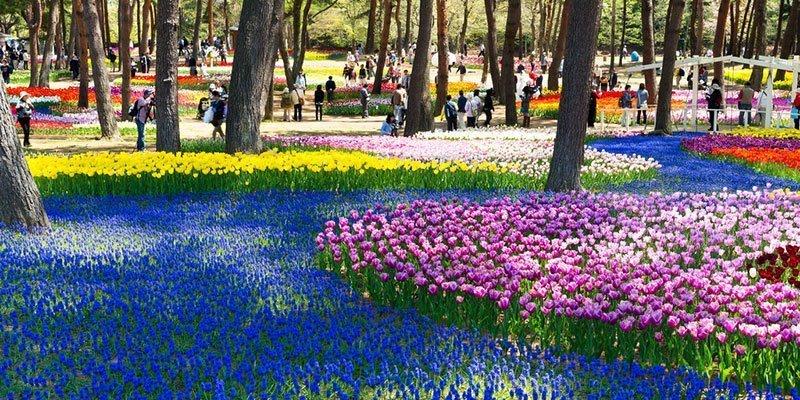 Hitachi Seaside Park Tulips Tourists