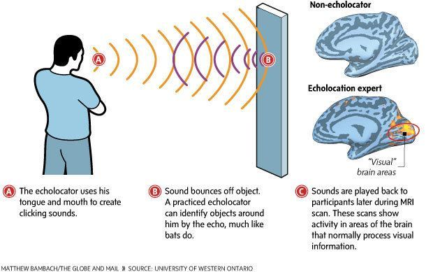 Human Echolocation Visual Explanation