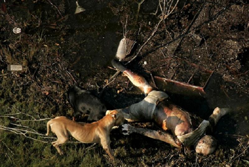 Hurricane Katrina Dead Dog