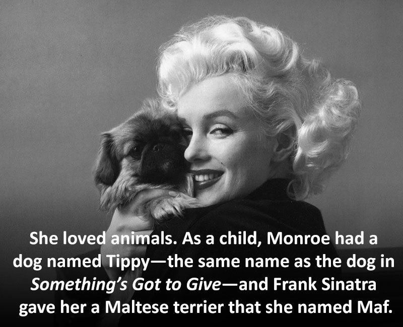 Marilyn Monroe Facts Dog