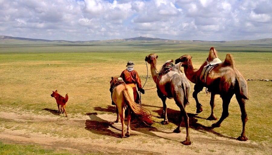 Mongolia Nomads Camel Steppe