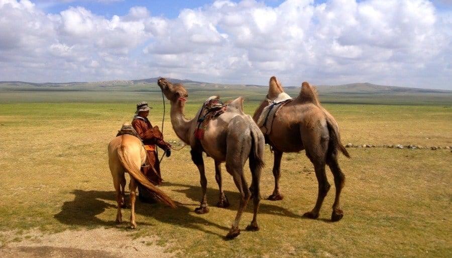 Mongolia Nomads Camels Horse