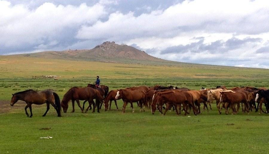 Mongolia Nomads Horse Herd