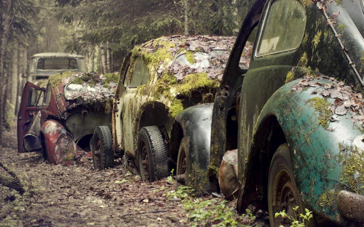 Reclaimed By Nature Abandoned Cars