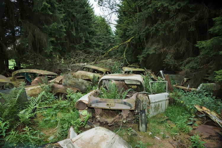 Reclaimed By Nature Cars