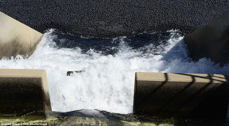 LA Reservoir
