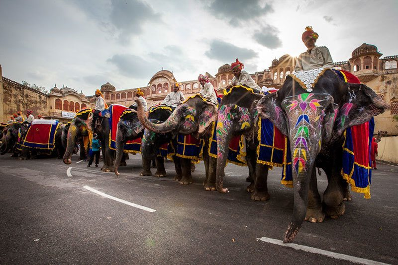 Parade Elephants