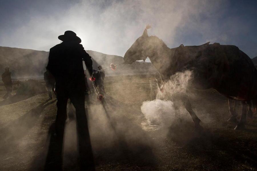 Tibetan Nomad Horse Dust