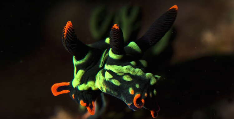 Two Headed Sea Slug