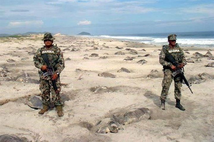 Marines protect turtle eggs from poachers