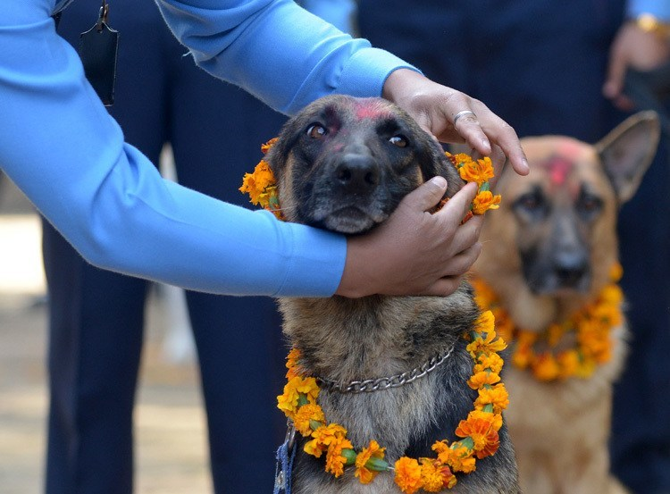 Dog Festival Nepal Garland On