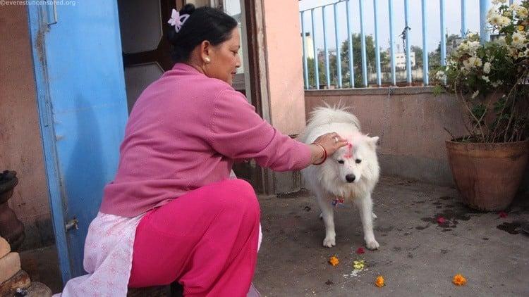 Dog Festival Nepal White