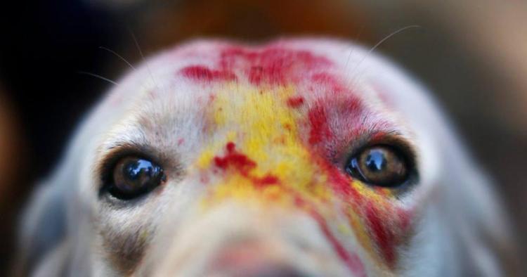 Dog Festival Nepal Eyes