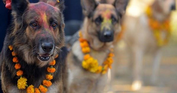 Dog Treats Nepal