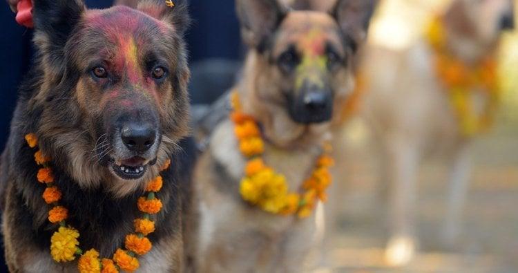 Dog Festival Nepal Smiling