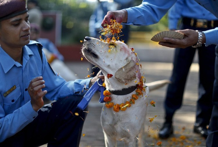 Dog Festival Nepal Sprinkled