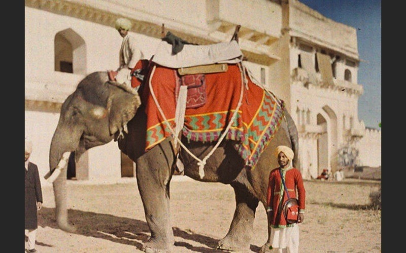 Autochrome India Elephant Travel Photography