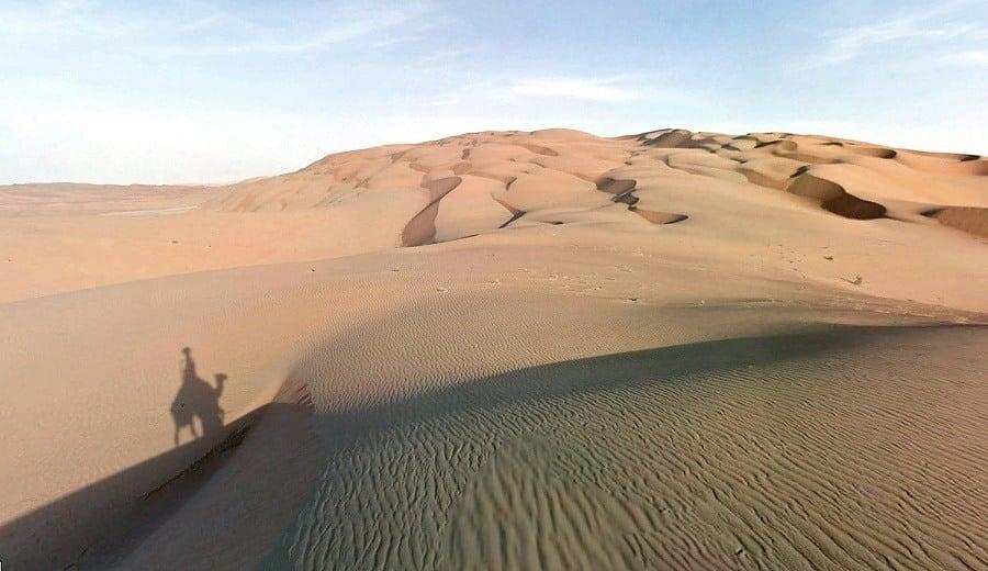 Desert Camel Shadow Google