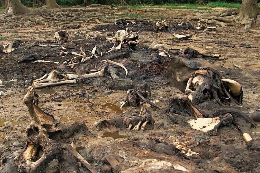 Elephant Bones Mud
