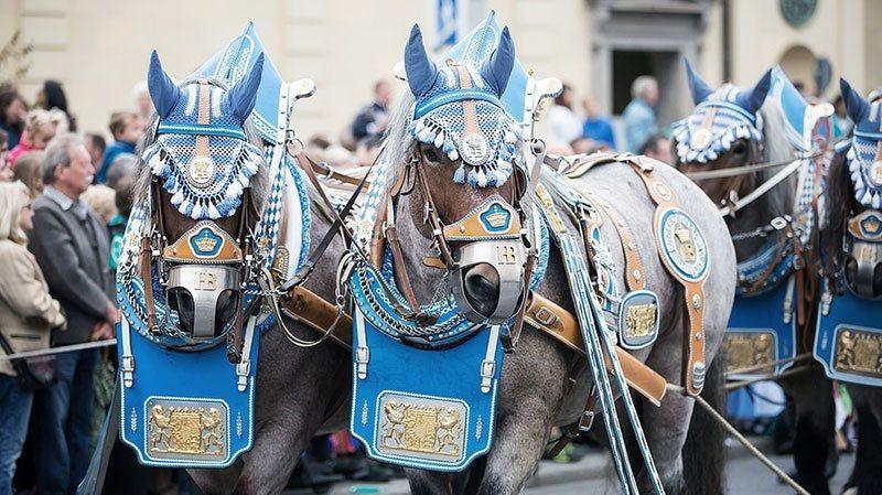 Oktoberfest Parade Horses