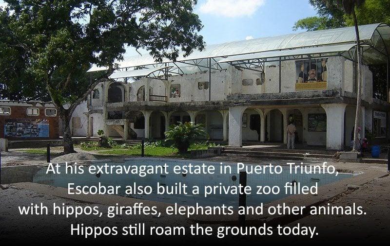 Pablo Escobar's Zoo