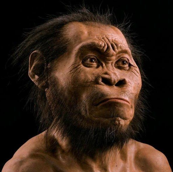 Primitive Human Ancestor Portrait