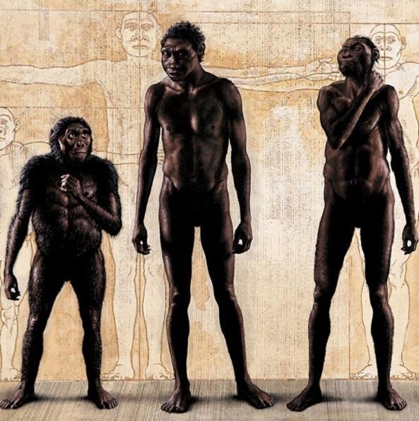 Primitive Human Ancestors
