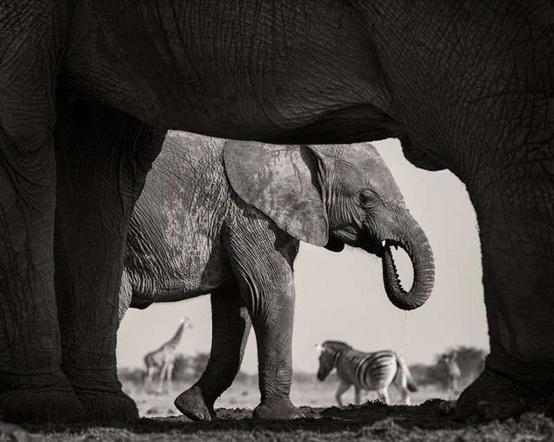 Wildlife Photographer Morkel Erasmus