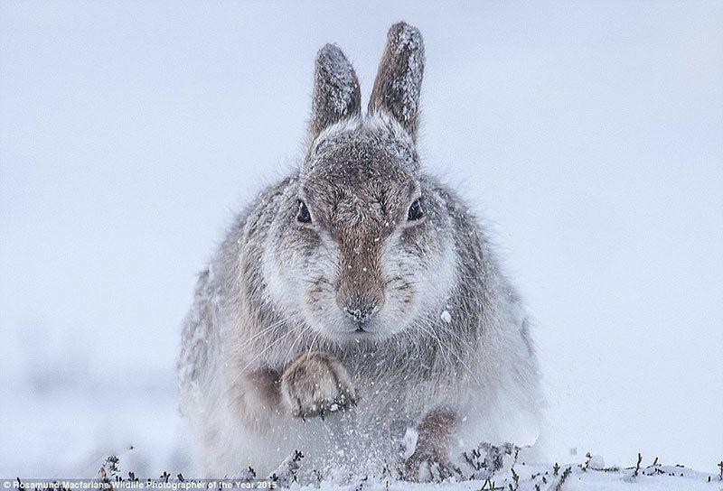 Wildlife Photographer Contest