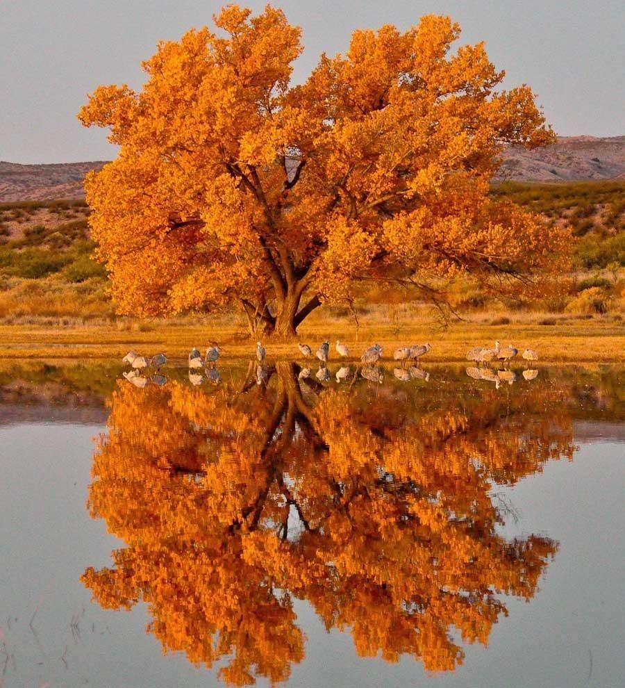 Fall Photo Roundup New Mexico