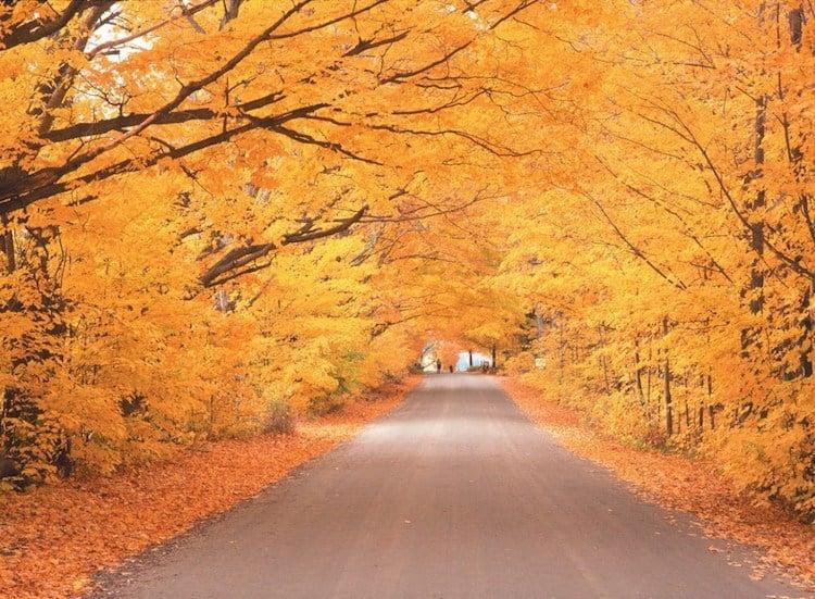 Best Road Trips Fall Drive
