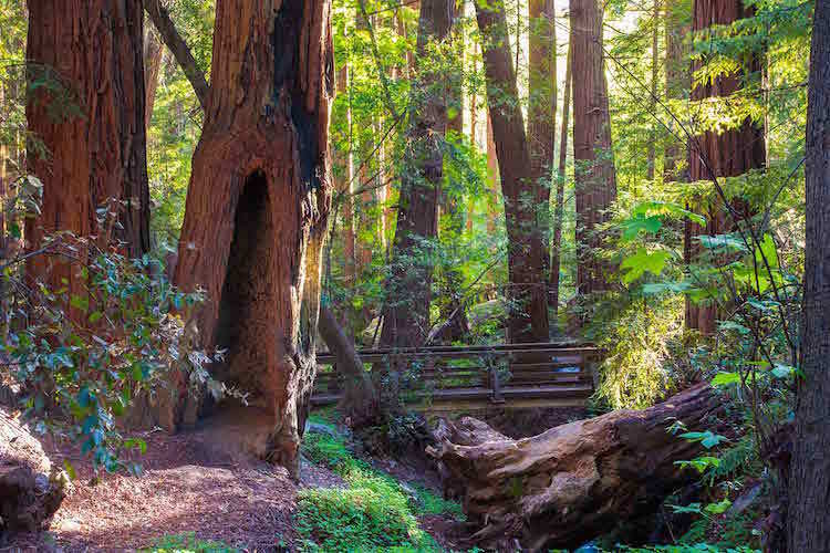Best Road Trips Pfeiffer Park