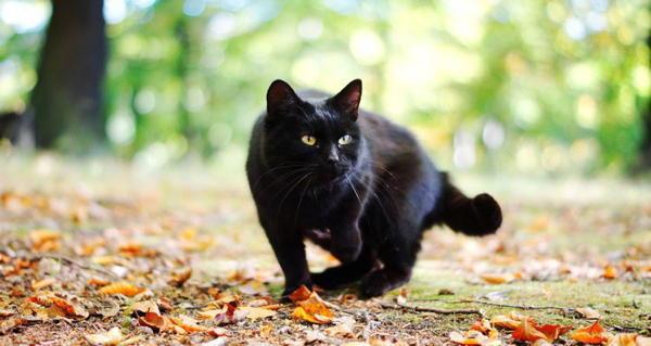 Black cat crossing! 13 common superstitions