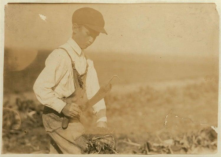 Child Labor 1900s Beet Farming