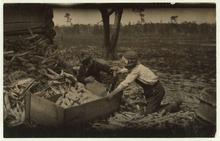Child Labor 1900s Corn Thrashing
