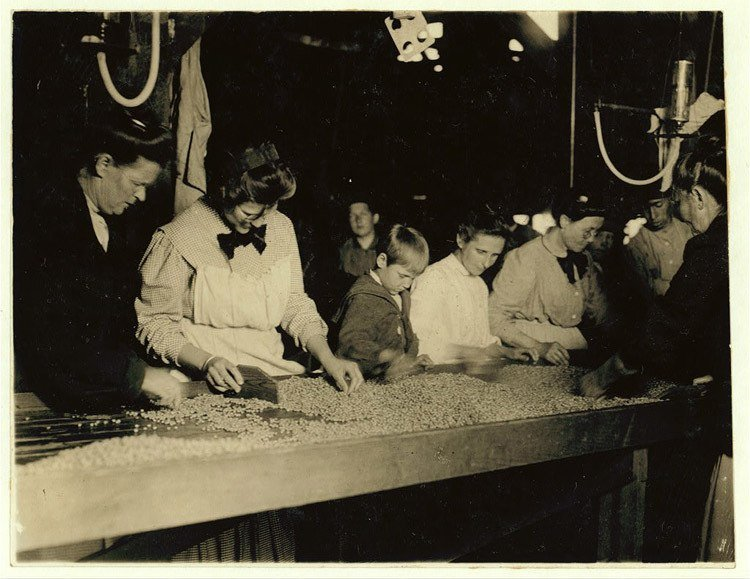 Child Labor 1900s Pea Sorter