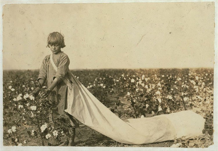 Child Labor 1900s Picking Cotton