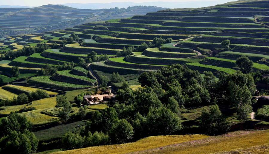 China Terraced Fields Green